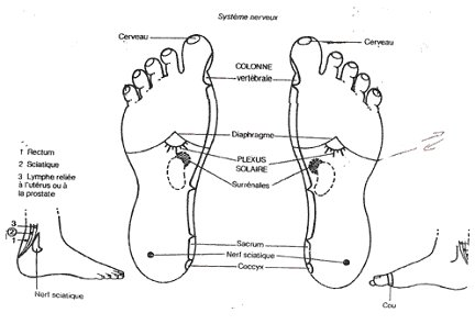 Top ACTMD / ACDM - La sciatique, névrite sciatique ou sciatalgie (3e  EW75